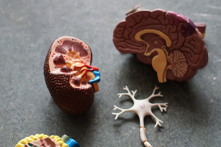 記憶力を向上させるために記憶のメカニズムを学ぶ